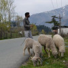 TRCF demands law to preserve grazing land in J-K