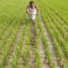 Farm loan waivers, not real income growth, driving rural revival: Report