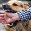 5496 dog bite cases reported at SMHS from April 2017 to Feb 2018