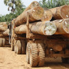 Vehicle loaded with illicit timber seized in Kehmil Forest Division