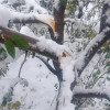 Nov 2018 snowfall: Dist Admin Kulgam disburses Rs 10.40 cr relief