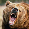 Four persons injured in bear attack in Budgam