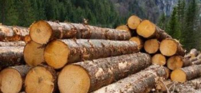 Timber seized from illegally run sawmill
