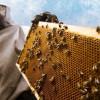 The unlimited possibilities of 'Beekeeping enterprise' in JK